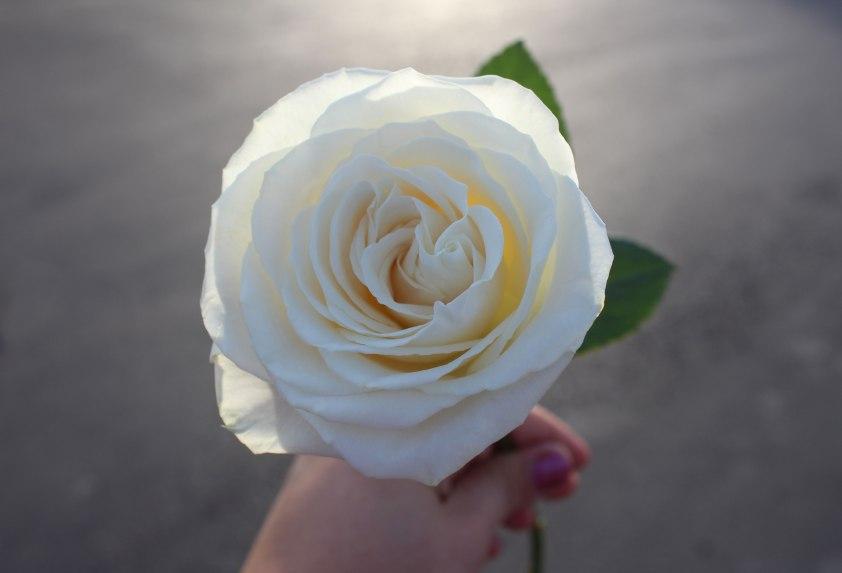 whiterosehand