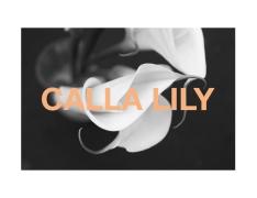 2b callalilyBWgraphic