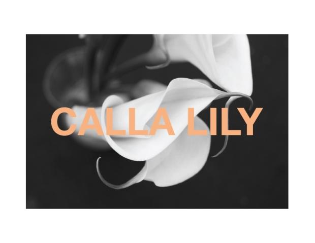 callalilyBWgraphic