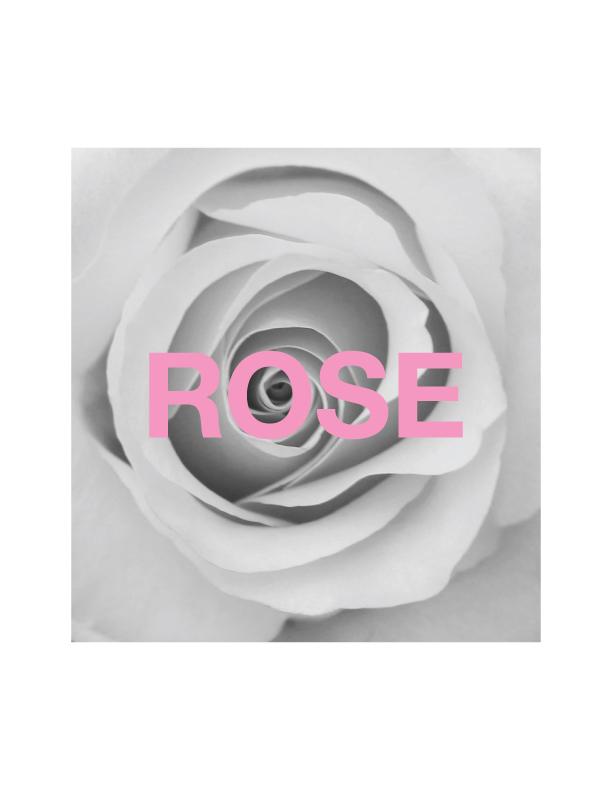 pinkrosebwgraphic