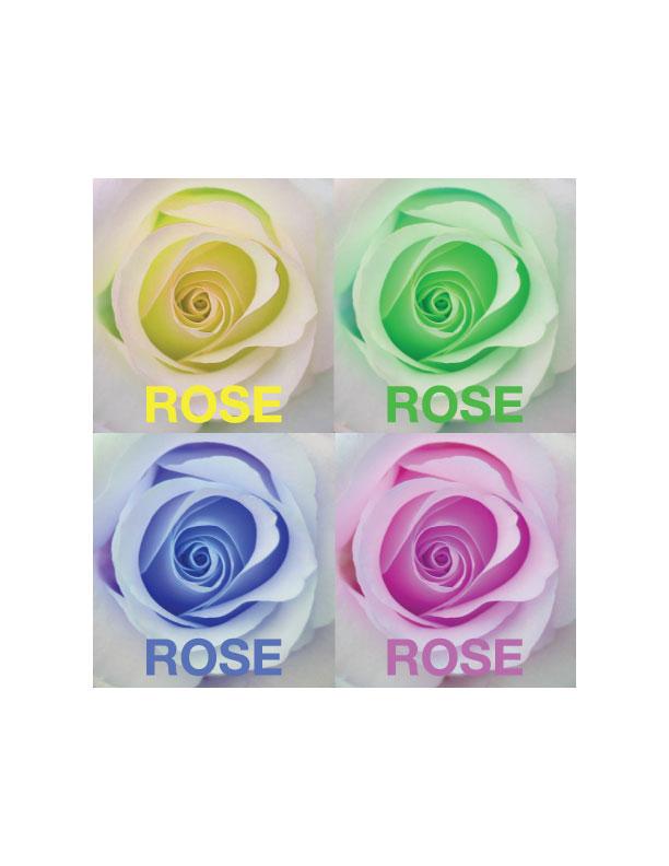 rosecymk