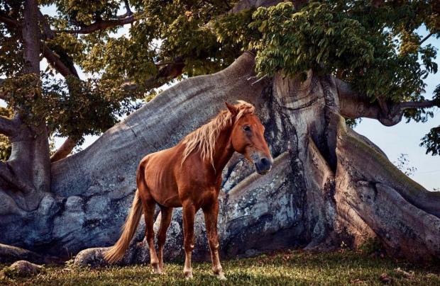colin brennan horse
