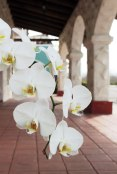 arch1Orchid-arches