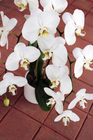 brick5white-orchid-diagonals2
