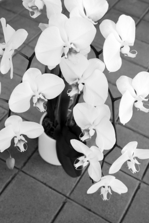 brick5white-orchid-diagonals2