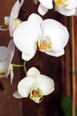brown4orchidlastpic