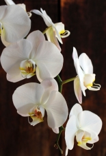 brown5white-orchids-woodcropped2