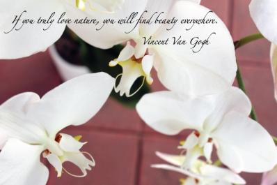 nature-quote