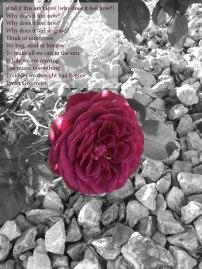 rose2txt