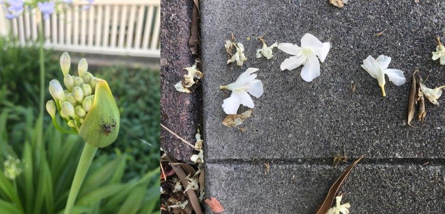 FlowerSpider