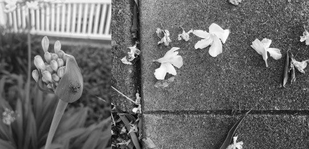 FlowerSpider2