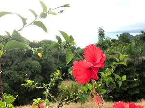 Hibiscus Pic Taken in Manuel Antonio